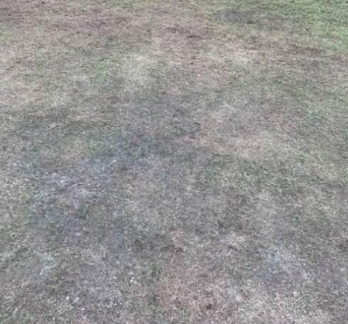 津媒解析武汉主场草皮由哪方负责:一招标方又浮出水面